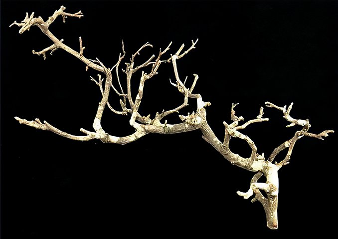 How to Make Natural Armature Trees - Step 1a